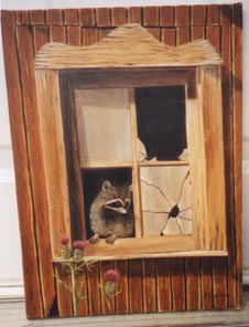 racoon in window
